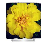 Summer Solstice Marigold Shower Curtain