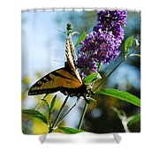 Summer Swallowtail Shower Curtain
