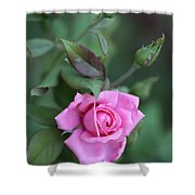 Summer Sweet Rose Shower Curtain