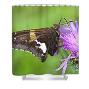 Summer Sweets Shower Curtain