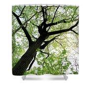 Summer Tree Shower Curtain