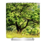 Summer Tree Shower Curtain