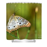 Summer Wings Shower Curtain