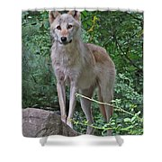 Summer Wolf Shower Curtain