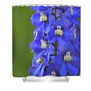 Summertime Blues Shower Curtain