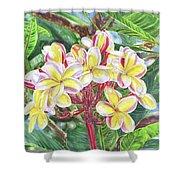 Summertime Kauai Island Plumeria Watercolor By Jenny Floravita Shower Curtain