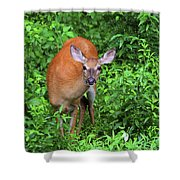 Summertime Visitor Shower Curtain