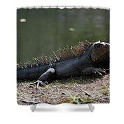 Sun Bathing Iguana Beside A Body Of Water Shower Curtain