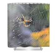 Spider On Web Shower Curtain
