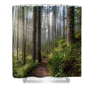 Sun Beams Along Hiking Trail In Washington State Park Shower Curtain