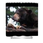 Sun Bear-7859 Shower Curtain