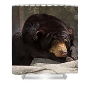 Sun Bear Shower Curtain