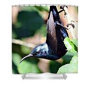 Sun Bird Acrobatics Shower Curtain