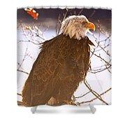 Sun Bird  Shower Curtain