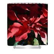 Sun Blushed Poinsettia  Shower Curtain