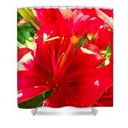 Sun Dappled Lily Shower Curtain