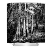 Sun Drenched Shower Curtain
