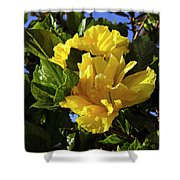 Sun-drenched Yellow Hibiscus Shower Curtain
