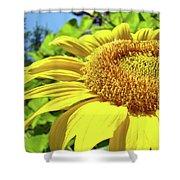 Sun Flower Art Sunlit Sunflower Giclee Prints Baslee Troutman Shower Curtain