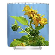 Sun Flower Artwork Sunflower 5 Giclee Art Prints Baslee Troutman Shower Curtain