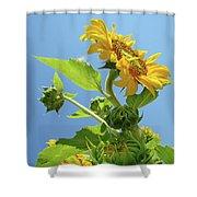Sun Flower Artwork Sunflower 5 Giclee Art Prints Baslee Troutman Shower Curtain