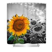 Sun Flower B And W Shower Curtain