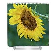 Sun Flower Drop Shower Curtain