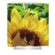 Sun Flower Floral Art Prints Sunflowers Summer Garden Shower Curtain