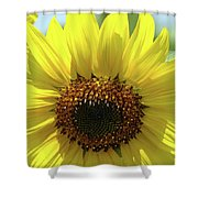 Sun Flower Glow Art Print Summer Sunflowers Baslee Troutman Shower Curtain
