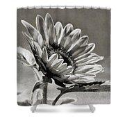 Sun Flower - Id 16235-142753-8673 Shower Curtain