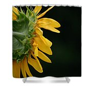 Sun Flower On Black Shower Curtain
