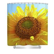 Sun Flowers Art Sunflower Giclee Prints Baslee Troutman  Shower Curtain