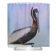 Sun Glow Pelican Shower Curtain