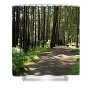 Sun In The Forest. Shower Curtain