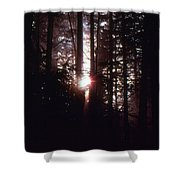 Sun In The Forest  Shower Curtain