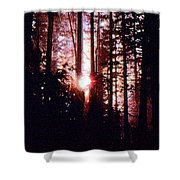 Sun In The Forest Two  Shower Curtain