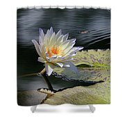 Sun Kissed Allure Shower Curtain