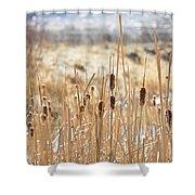 Sun Kissed Cattails - Casper Wyoming Shower Curtain