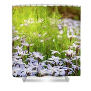 Sun-kissed Meadows With White Star Flowers Shower Curtain