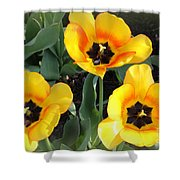 Tulips Kissed By The Sun Shower Curtain