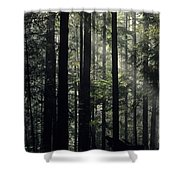 Sun Light Shower Curtain