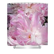 Sun Lit Peonies Shower Curtain