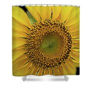 Sun Of Flowers Shower Curtain