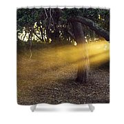 Sun Rays 2 Shower Curtain