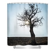 Sun Rays And Bare Lonely Tree Shower Curtain