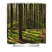 Sun Rays In Forest Shower Curtain