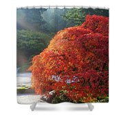 Sun Rays Over Old Japanese Maple Tree Shower Curtain