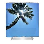Sun Rays Through A Tall Palm Tree Shower Curtain