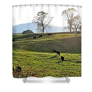 Sun Shadows Shower Curtain
