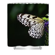 Sun Shining Through The Wings Of A Rice Paper Butterfly Shower Curtain